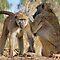 Primates Bonding