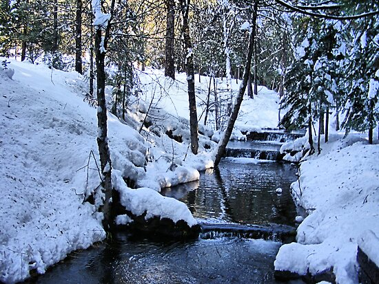 The Little Bear Creek = Alta, California by NancyC