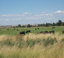 Country Moo's by WaleskaL