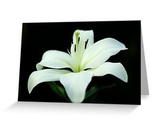 White lily 1 Greeting Card
