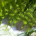 Fern - Air Sun Water by Michael Eyssens