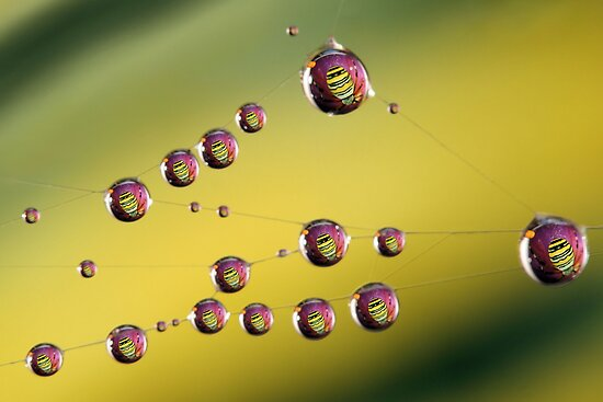 Droplets in spiderweb by jimmy hoffman