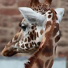 Giraffe by sjmphotos