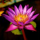 Water Lily - King&#x27;s Palace Phnom Penh Cambodia by Louise Fahy