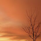 Tangerine sky by Cricket Jones
