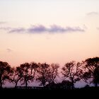 Sallagh Tree Line by Bern McAllister