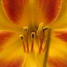 Daylily Orange and Red by SpiritFox