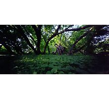 Pinhole Study: Shaded Gem by The Grand River Photographic Print