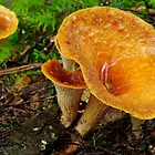 Woolly Chanterelle Mushrooms by Stephen Beattie
