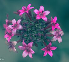 Pink Flowers Explosion by Michal Luzzatto