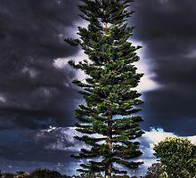 Tree over Punta  Gorda, Florida by LudaNayvelt