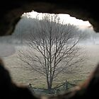 Through the Looking Glass  by Dan Casey Campbell
