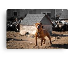 Junk Yard Dog Canvas Print
