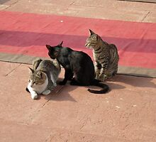 3 Cats looking pensive by ashishagarwal74