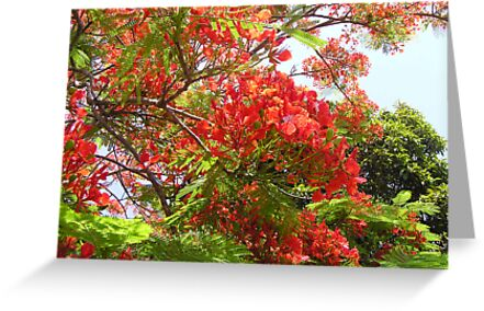 Poinciana Tree #1 by Virginia McGowan