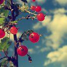 Berries by Ardisrawr