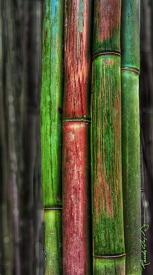 Rainforest Colours by Randy Jay Braun