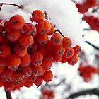 Berrylicious Beauties ! by Linda Bianic