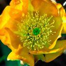 Cactus Flower V01 by Jennifer Craker