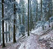 frosty forest by peterwey