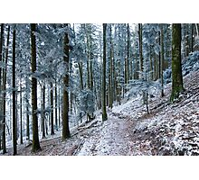 frosty forest Photographic Print