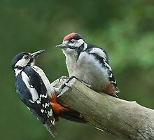 Great Spotted Woodpeckers by wildlifephoto