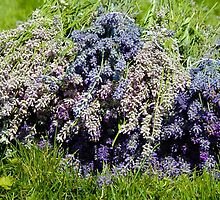Lavender Bundles by The Accidental Farmers