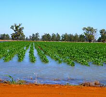 Flooded Corn by Jan Richardson