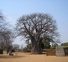 Namibian Boab Tree by Jan  Saggers
