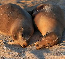 Sleeping Beauties by Sue  Cullumber