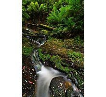 Mini Bulga Falls Photographic Print