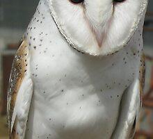 Owl by Sue Wickes
