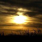 Sunset over Sugarcane Fields by Richard Cassar