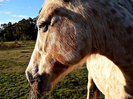 Horse by Stanton Hooley
