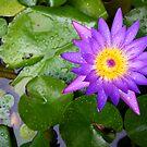 Flower after Rain by Aengus Moran