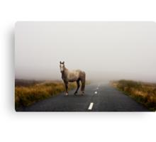 Sallygap horse Canvas Print