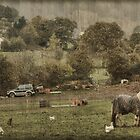 Once Upon a Farm by missmoneypenny