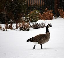 A Stroll In The Snow by Carol Barona