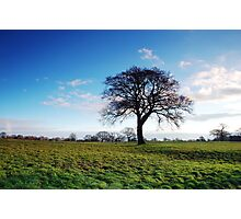 Just a tree Photographic Print