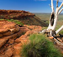 Ghost Gum Revisited by Steven Pearce