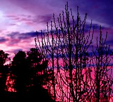 Pink And Purple Sunset by Lindsay Dean