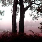 Morning Mist in Gippsland by Roz McQuillan