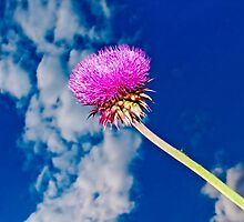 Wonderful Day for the Musk Thistle  by georgiaart1974