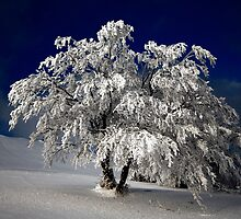 January White by Philippe Sainte-Laudy