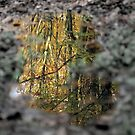 Autumn-reflections in puddle by jimmy hoffman