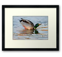 A Hole in the Ice Framed Print