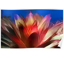 Bromeliad On Fire Poster