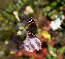 Butterfly on flower by Byrom