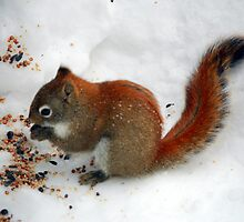 Red Squirrell  by Shelby  Stalnaker Bortone