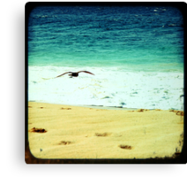 Summer beach photography print, green ocean waves golden sand soaring flying bird, Los Cabos Mexico travel photography, wall art home decor Canvas Print